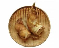 takenoko2